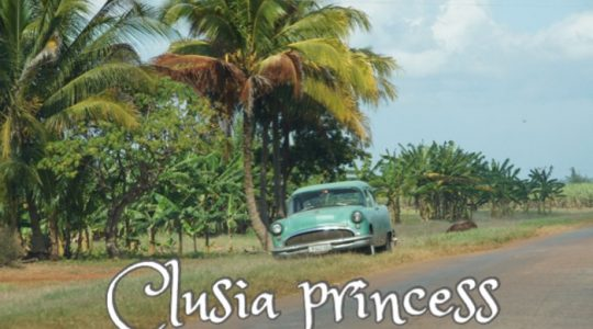 Clusia princess (1)